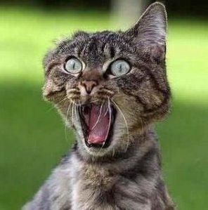 Cat_shocked