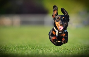 bigstock-dog-running-6241804_900
