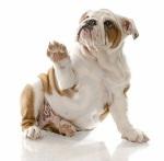 filhote-de-cachorro-que-sustenta-a-pata-thumb12823104