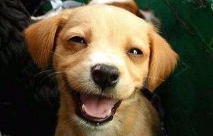 sorriso-cachorro02