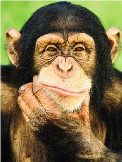 macacos-pensando
