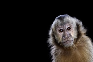 animal-photography-affinity-Brad-Wilson-monkey-1
